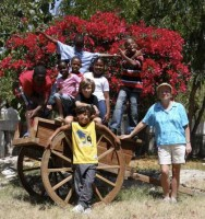 Kids with donkey cart 23