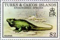 iguana stamp|79