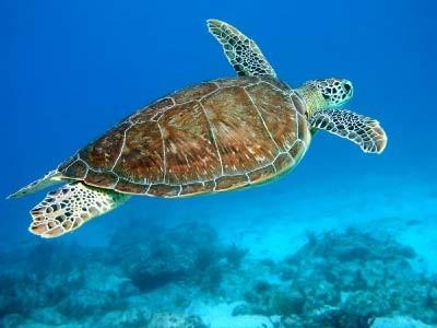 sea turtle|205