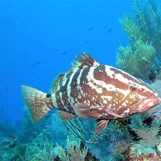 grouper|202