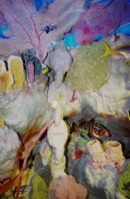museum reef display 191